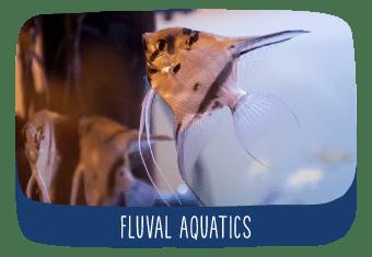 tv_fluval_aquatics