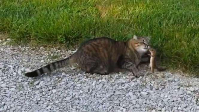 cat and chipmunk 2