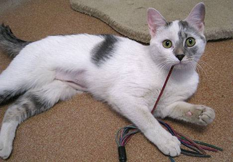 cat pinterest 1