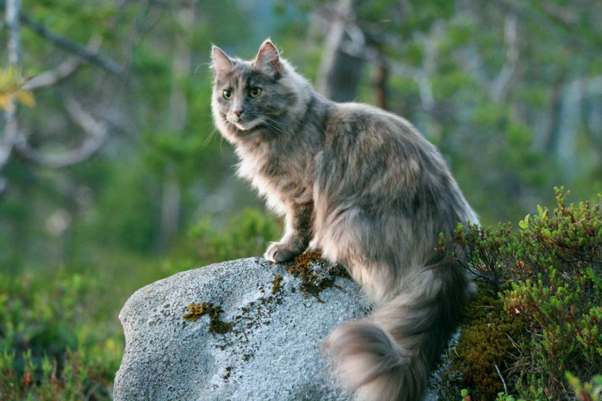 Reigning Cats: Why Felines have Ruled the Pet World for so Long