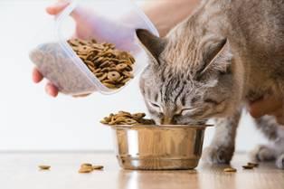 cat-feeding-advice Webbox website
