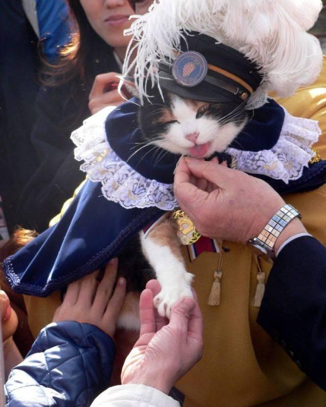 tama_the_cat