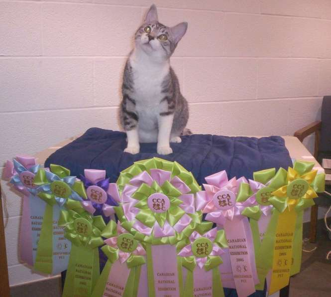 SPINNER WITH RIBBONS SHELTER CAT SHOW