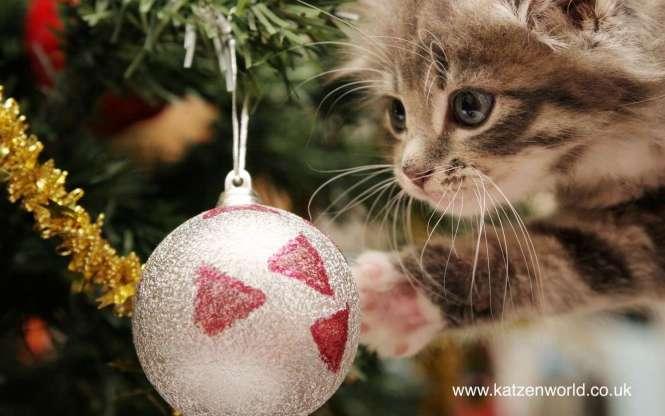 6936504-christmas-cat