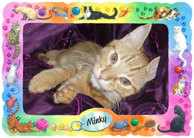 Minky 4 Website