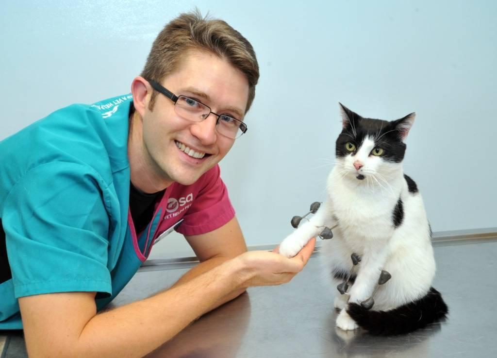 Charity Mews: Hancock the Superhero Cat Survives Horror Fall