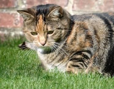 cat coat colour 3