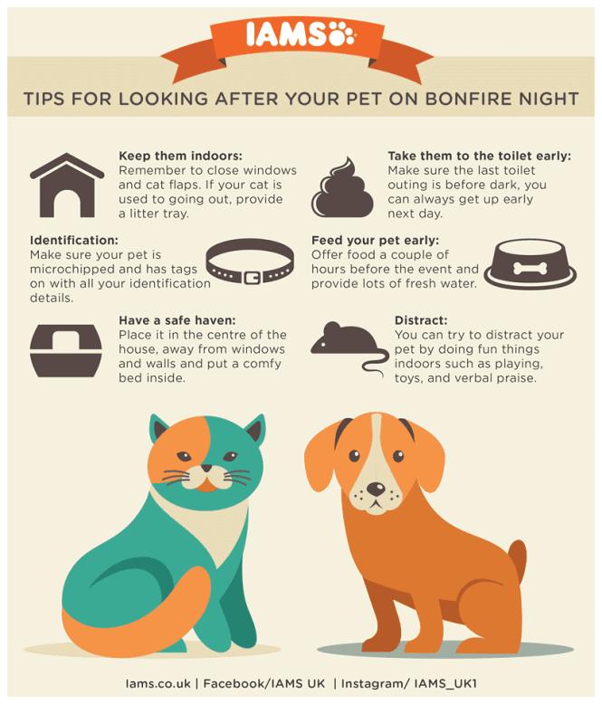 IAMS Bonfire Infographic