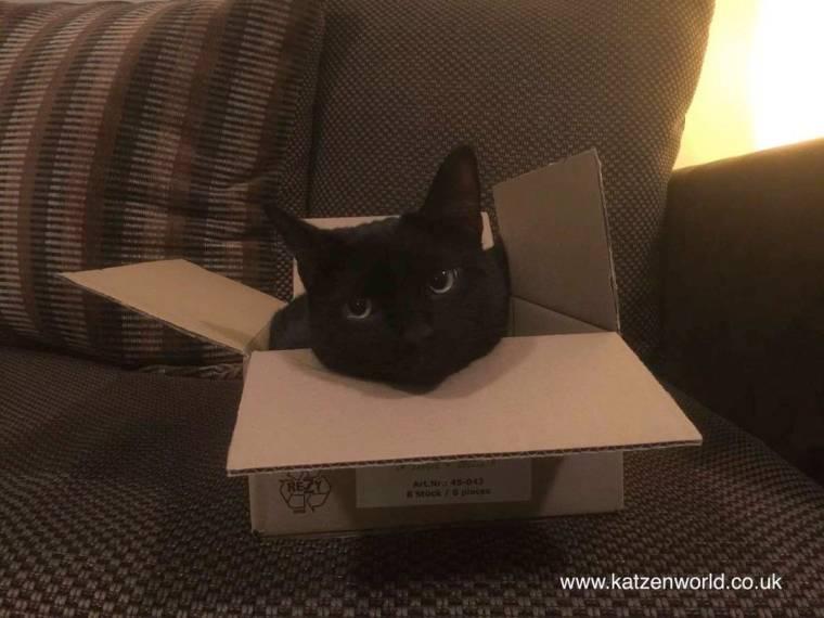 Nubia-in-box-again.jpg