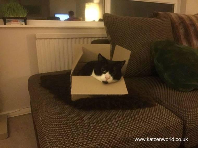 Oliver-in-box.jpg