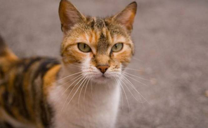 Image Result For Can I Use Revolution For Cats On A Small Dog
