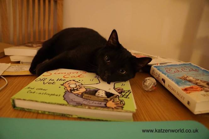 Simon's Cat off to the vet