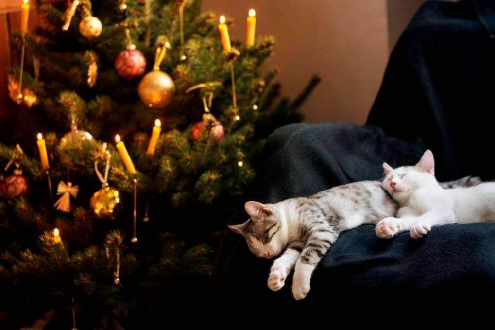 Cats Vs Christmas Trees.Tips Advice Cats Versus Christmas Trees Katzenworld