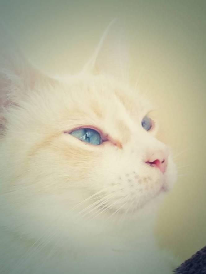 mr bailey blue eyes