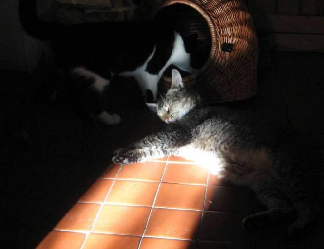 tosca-in-a-sunbeam2