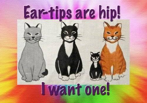 cat tnr ear