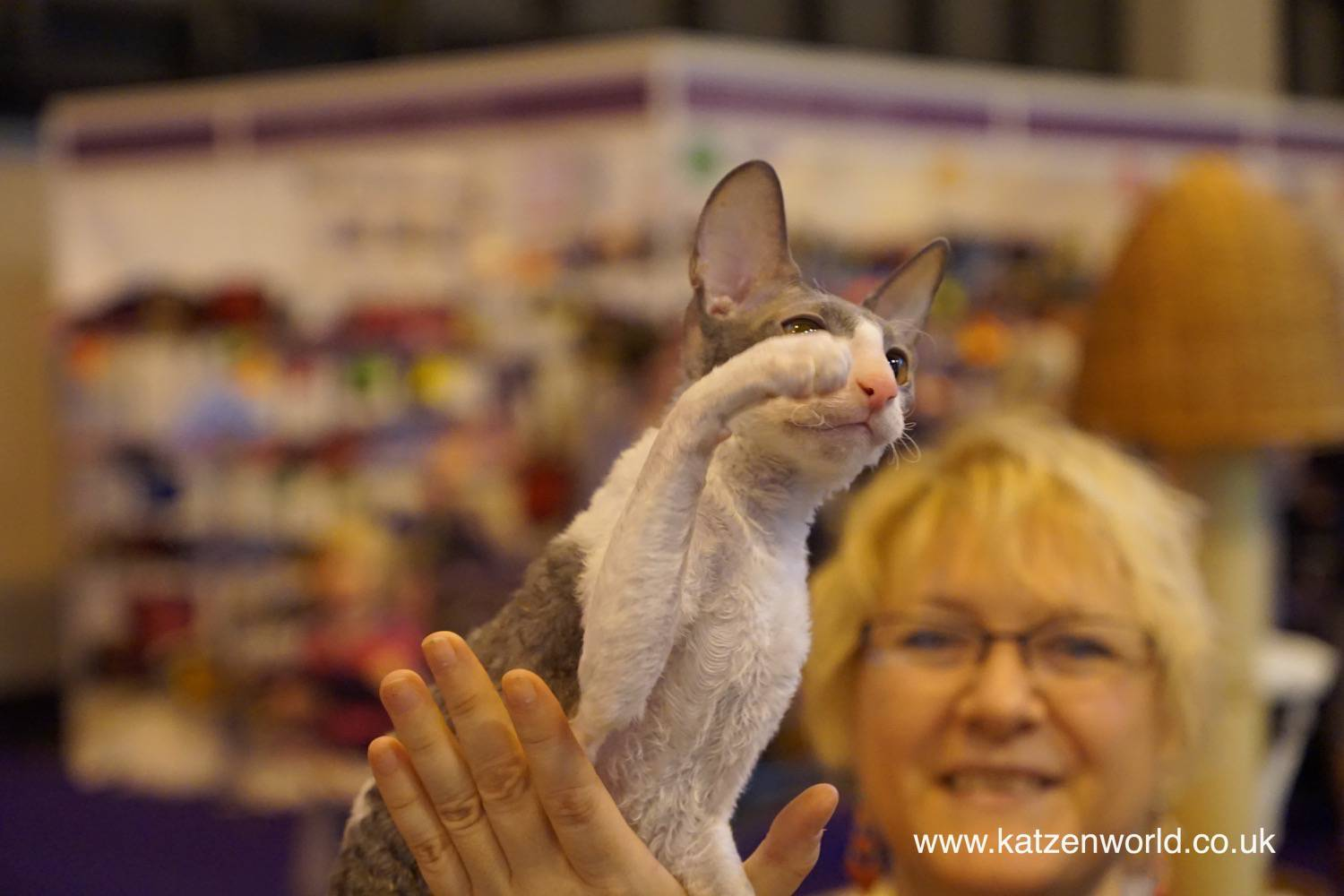 Events: A Rex Cat at the National Pet Show