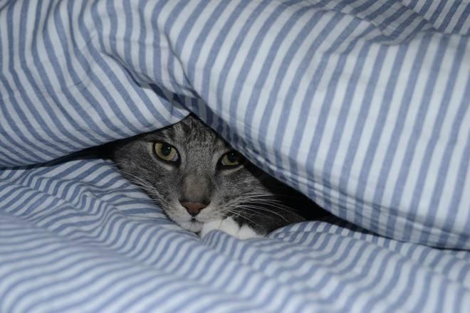 cat-in-bed-