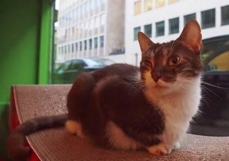 le chat touille 3