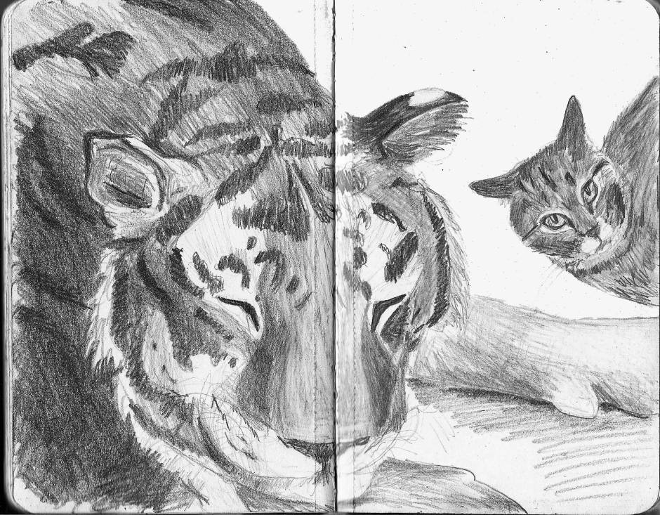Drawing of a tiger and a tabby cat.
