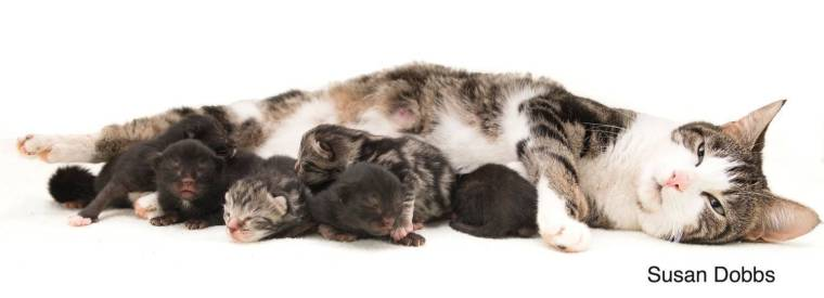 Anna and kittens (2)