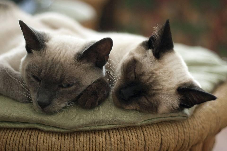 A Few Home Remedies For Cats - Katzenworld