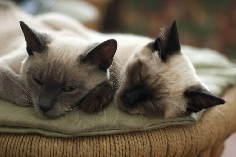 cats-882051_960_720
