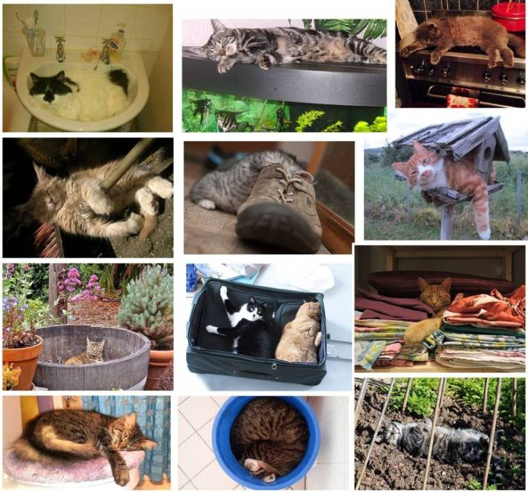 icatcare photo 4