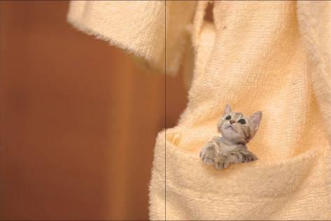 tiny cat 2