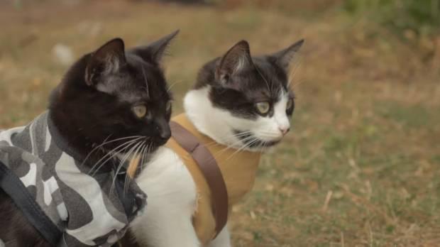 cat_vs_zombies_20150914_620_348_100