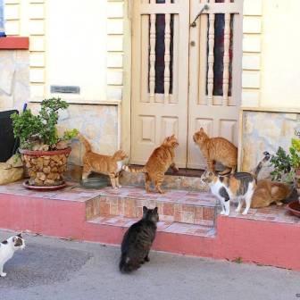 Gozo - Zebbug 1 - ©2016 Islands of Cats 2