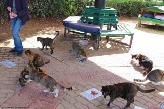 Malta - Sliema - ©2016 Islands of Cats