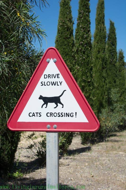cat warning sign