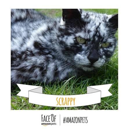 Scrappy_Cat._V272264117_