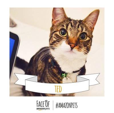 Ted_Cat._V272264118_