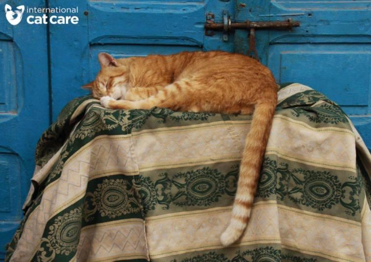 6-Street Cat