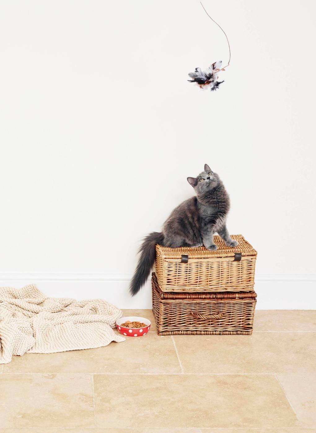 Cat Image_Tesco Bank