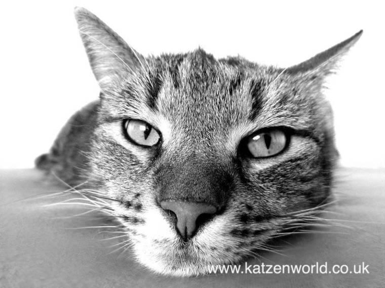 cat-photography1