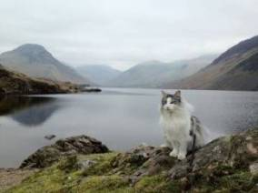 keeks sitting near wastwater