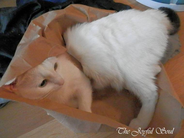 A Bag of Cat 3