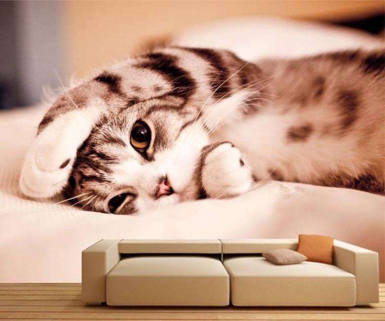 Sleepy-Cat-Mural