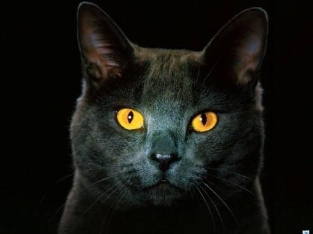 black cats post 2