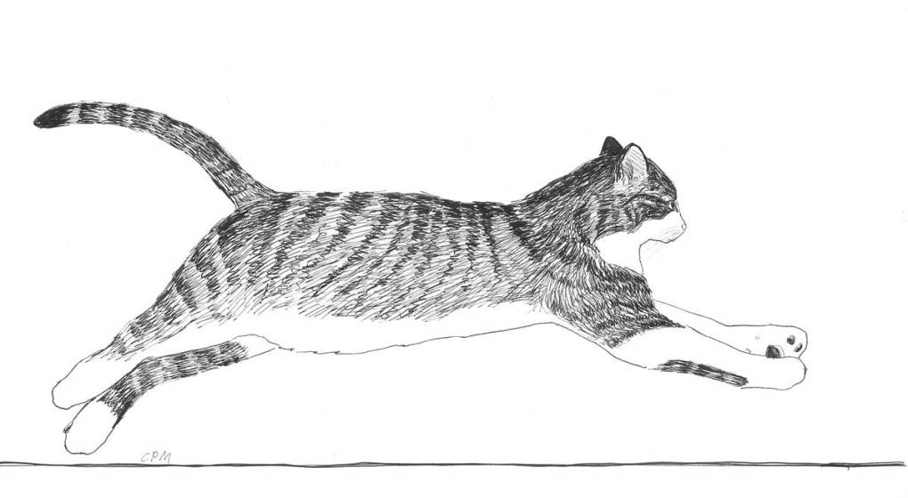 Ink drawing of a cat running.