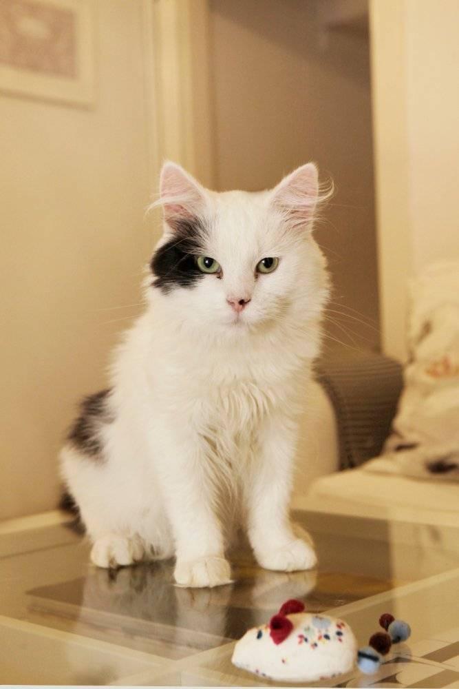 gus-the-cat-credit-anna-branthwaite
