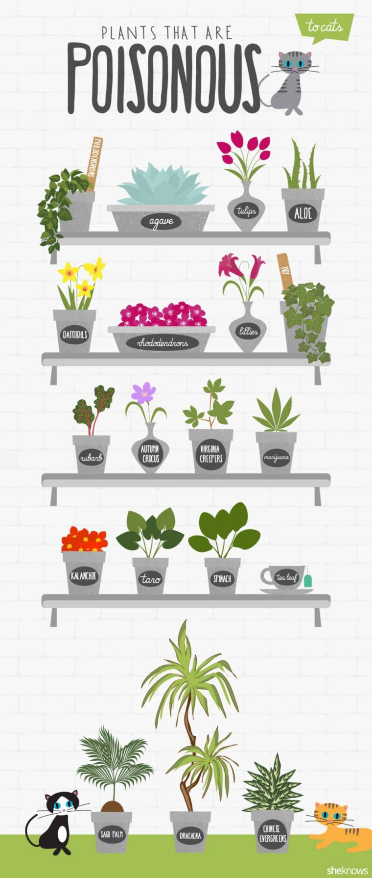 plants-poisonous-to-cats_q0b0cy