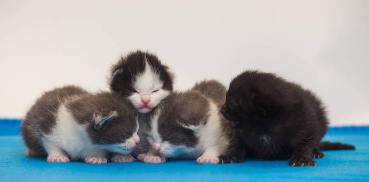 024-abandoned-kittens-photo-credit-to-swns