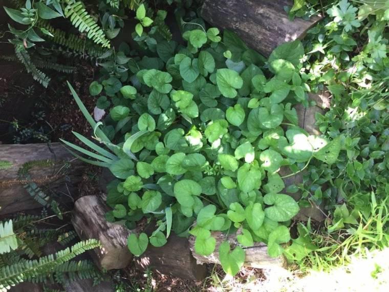 felix-grave-c-violets