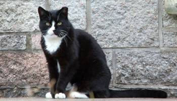Why leaving your cat at home is a better solution than a cattery