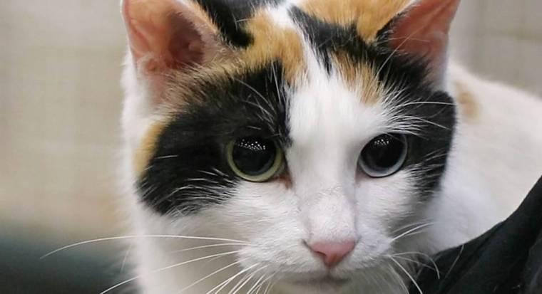 136390c4a0 11 Cat Breeds That Love Water - Who Knew - Katzenworld