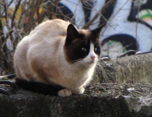 Secret-live-of-street-cats-of-Riga-5755e09645c14-jpeg__880